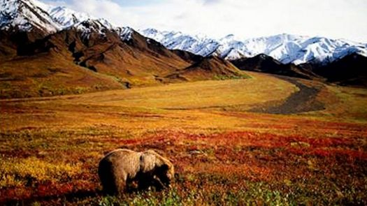 Alaska  Autumn Colors