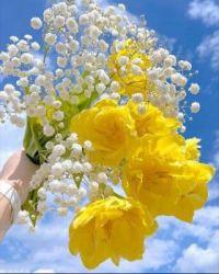 zomer bloem