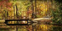 Fall-in-Delaware