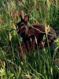 BUNNY IN HIGH GRASS