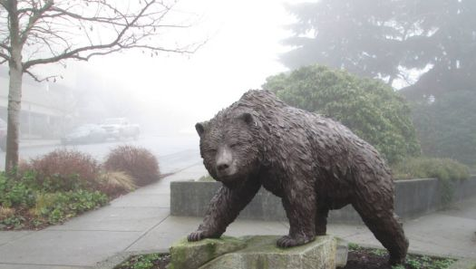 a bear in the fog ...