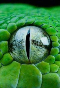 2  ~  Snake Eye.