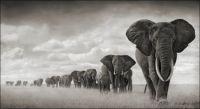 The Elephant Herd - Medium Size