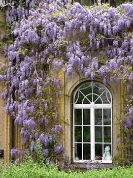 ce166176203cca1564dbe1eb5f9f1a77.jpg wisteria house.jpg resize