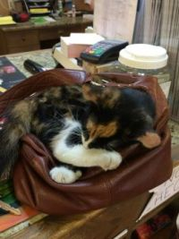 Feed store kitty taking over my purse!