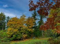 A hike in Latoria Creek Park near Victoria BC