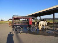 Buggy rides at the Red Caboose Motel in Amish Country at Ronks, PA.