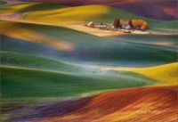 Farm lands of Palouse, Washington