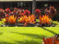 Hawaii landscape 2