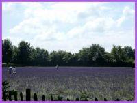 De Lavendelhoeve in Hasselt.
