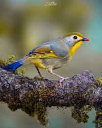 @jeetaman.wildlife.photography