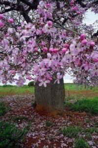 ~Flowering Tree~ looks likes flowers in a vase