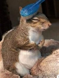 Squirrel getting groomed