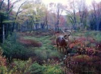 Autumn Whitetail-