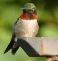 Gotta love Hummingbirds