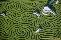 Wrong turns: Longleat maze near Bath is the largest in Britain