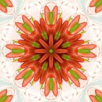 Strawberry Kaleidoscope