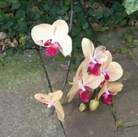 Orchids for everyone!