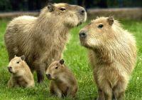 2  ~  'Familie Zen, in het kwadraat.'  :-)