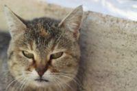 angry cat wuuu :)))