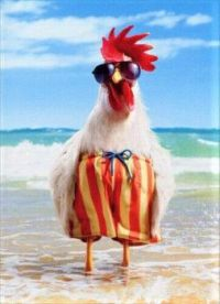 Rooster at the Beach