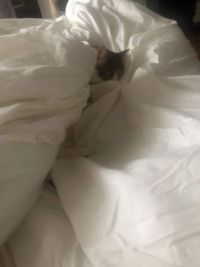 Princess snuggling in the comforter
