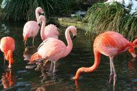 Flamingos in the Zoo Leipzig