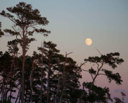Moonrise over Chincoteague