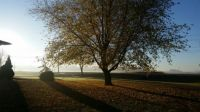 Foggy November Morning