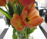 Orange double headed Tulips