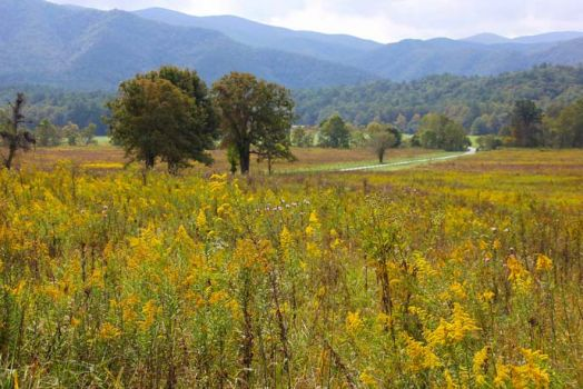 Valley Floor Of Cades Cove