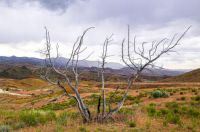 THE DRY SIDE OF OREGON