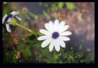 Derek's flowers