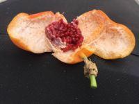 Passion flower fruit cut open.
