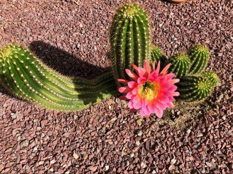 Spring has come to the Arizona desert..