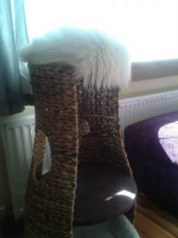 Freya - Despite how it looks, the new cat tower doesn't actually come with a white fluffy pillow on top!