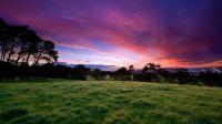 Twilight in the Meadow