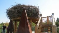 Eagles nest at the Wild Center