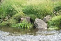 water, grass and stones