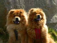 Annie & Lucy, Sadly missed