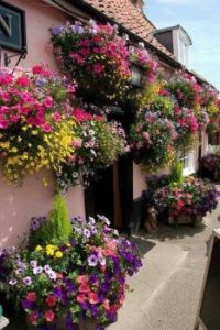 Spectacular Cottage Gardens.
