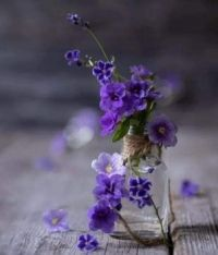 Virág (3)