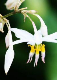 Beautiful flower from the Hamilton Gardens