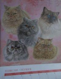 Kitty Calendar February 2021