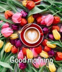 Tulipány a kávička