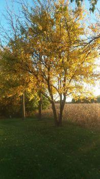 A country autumn scene ( smaller version)