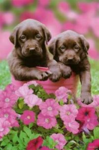 Puppies pretty in Pink