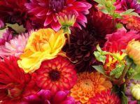 fresh flowers.jpg6