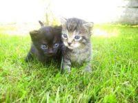 Koťátka poprvé venku na trávě