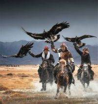 Fun with Eagles and horses